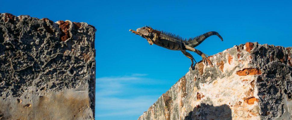 jumping-chameleon-970x400.jpg