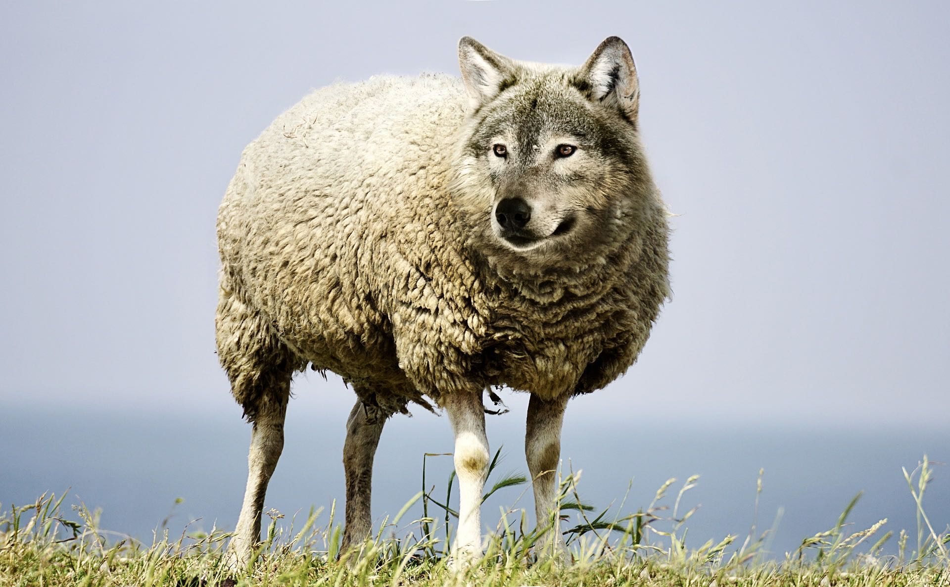 wolf-in-sheeps-clothing-1920x1186.jpg